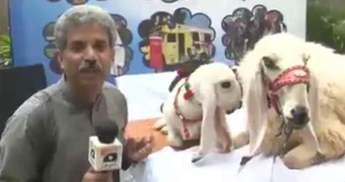 पाकिस्तानी पत्रकार ने भेड़-बकरियों का लिया ऐसा अजीबो-गरीब इंटरव्यू कि देखकर हो जायेंगे लोट-पोट